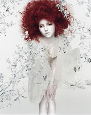 http://zouh.cowblog.fr/images/lilycole3.jpg